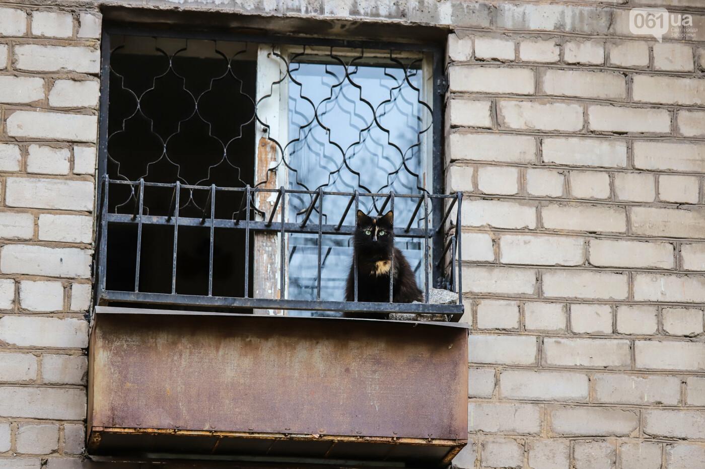 «В плену у заповедника»: как на Хортице живут люди без права на приватизацию жилья, - ФОТОРЕПОРТАЖ , фото-30