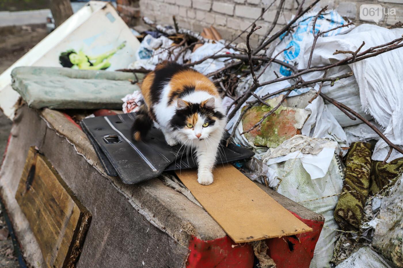 «В плену у заповедника»: как на Хортице живут люди без права на приватизацию жилья, - ФОТОРЕПОРТАЖ , фото-38
