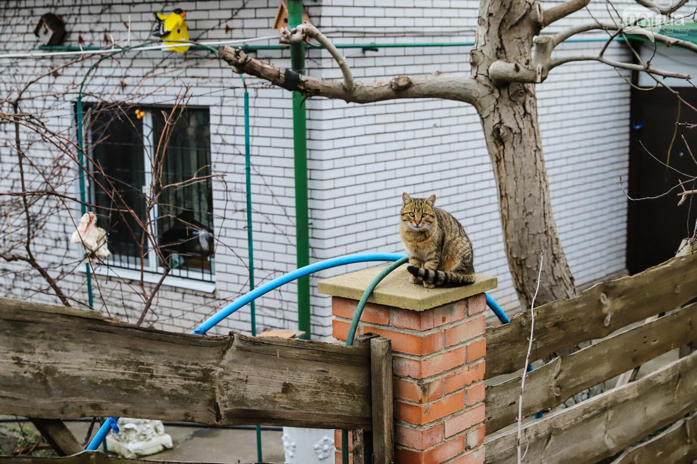 «В плену у заповедника»: как на Хортице живут люди без права на приватизацию жилья, - ФОТОРЕПОРТАЖ , фото-46