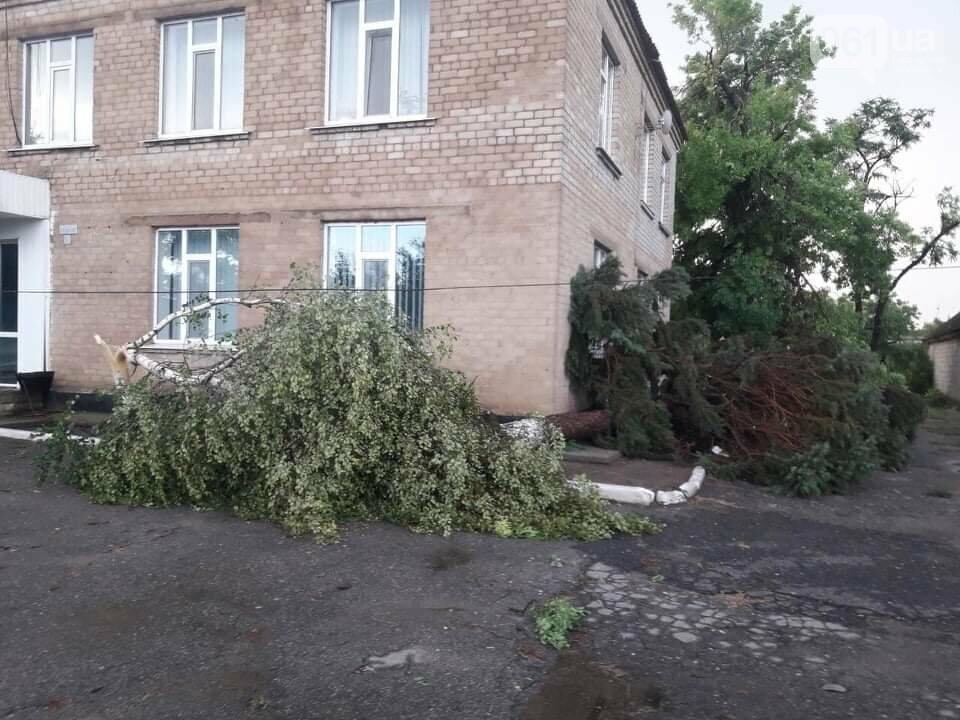 Шквальный ветер обесточил дома и повалил деревья в Запорожской области, - ФОТО, фото-2