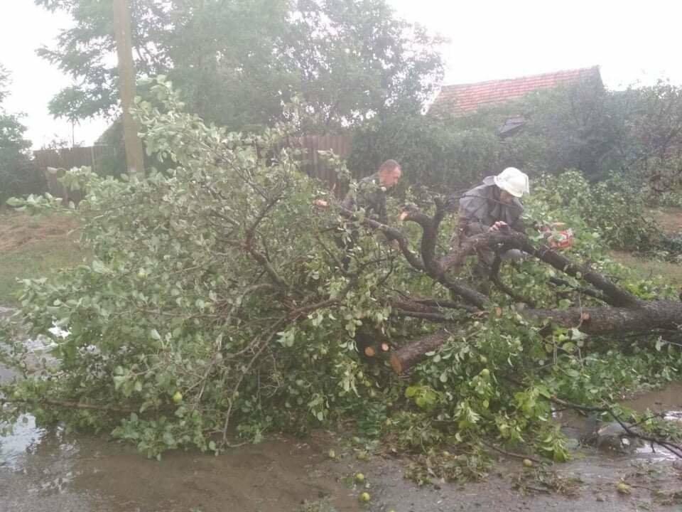 Шквальный ветер обесточил дома и повалил деревья в Запорожской области, - ФОТО, фото-1