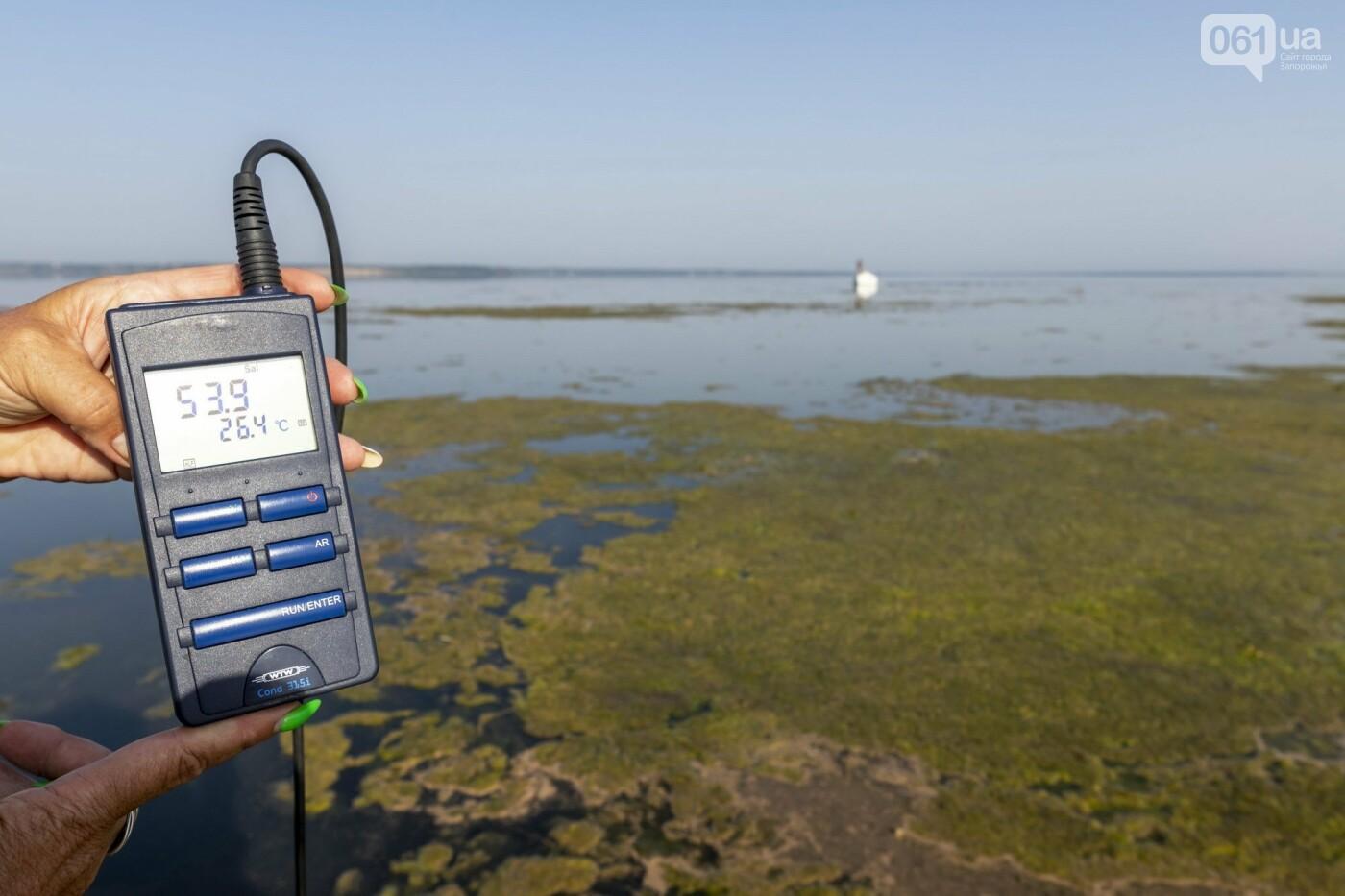 Специалисты исследовали водную фауну Молочного лимана - какие виды доминируют , фото-7