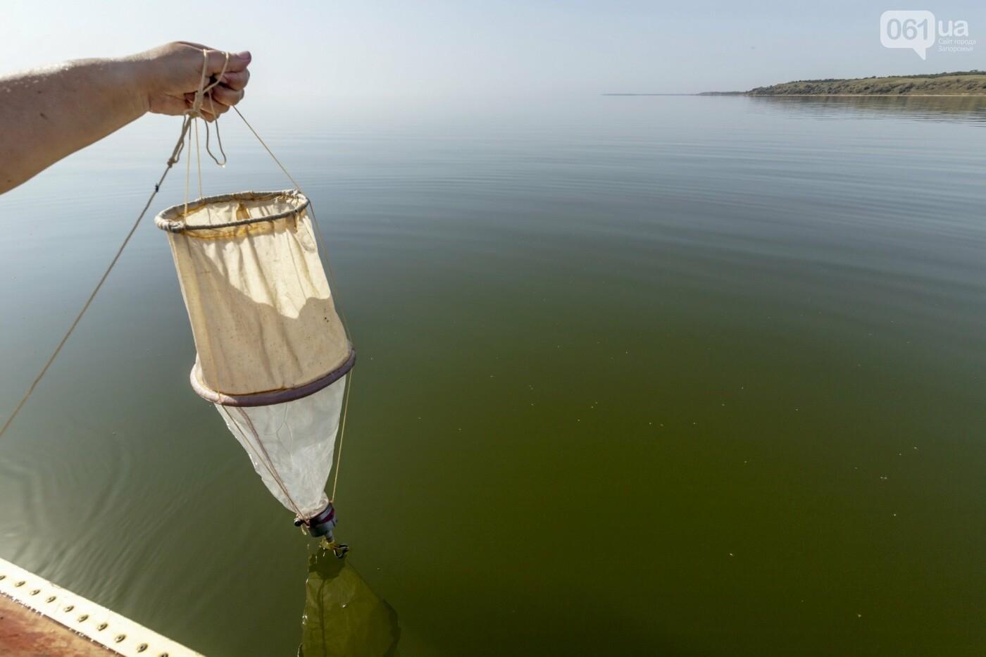 Специалисты исследовали водную фауну Молочного лимана - какие виды доминируют , фото-4