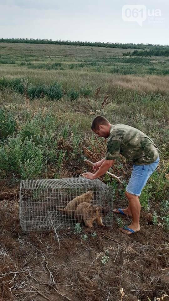 В Запорожской области в степь выпустили 11 сурков, - ВИДЕО  , фото-1
