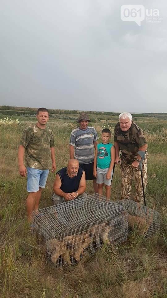 В Запорожской области в степь выпустили 11 сурков, - ВИДЕО  , фото-2