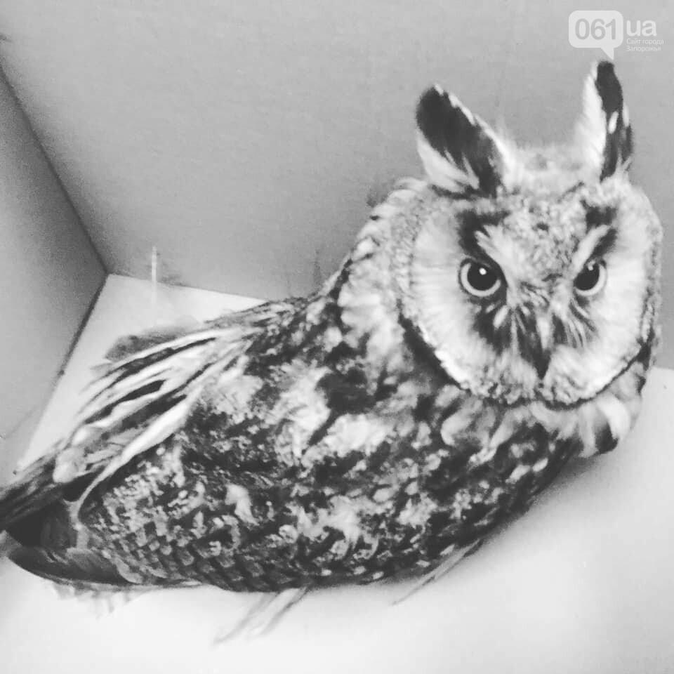Запорожская зоозащитница рассказала о первых жертвах открытия сезона охоты, фото-2