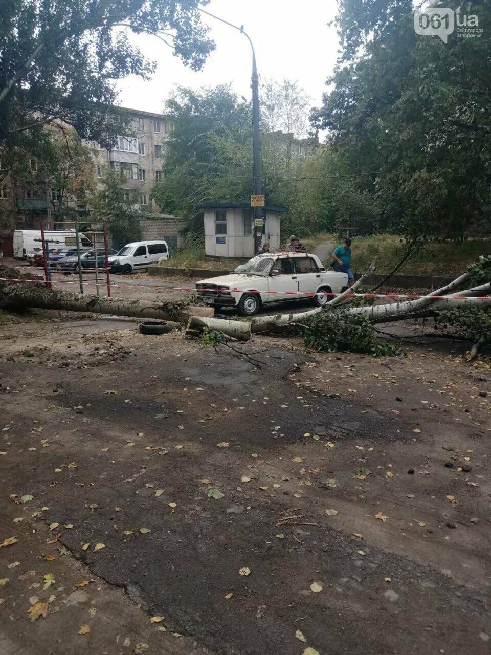 В Запорожье тополь рухнул на автомобиль, - ФОТО, фото-2