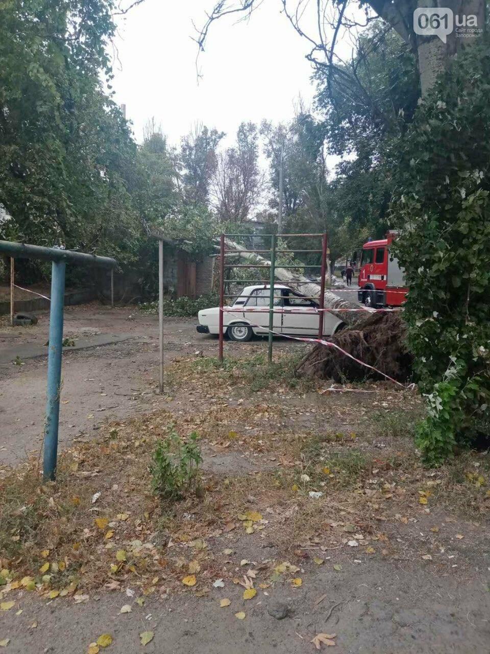 В Запорожье тополь рухнул на автомобиль, - ФОТО, фото-3