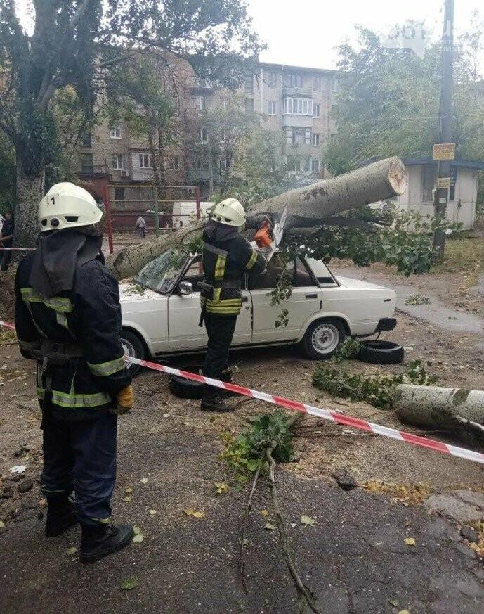 В Запорожье тополь рухнул на автомобиль, - ФОТО, фото-1