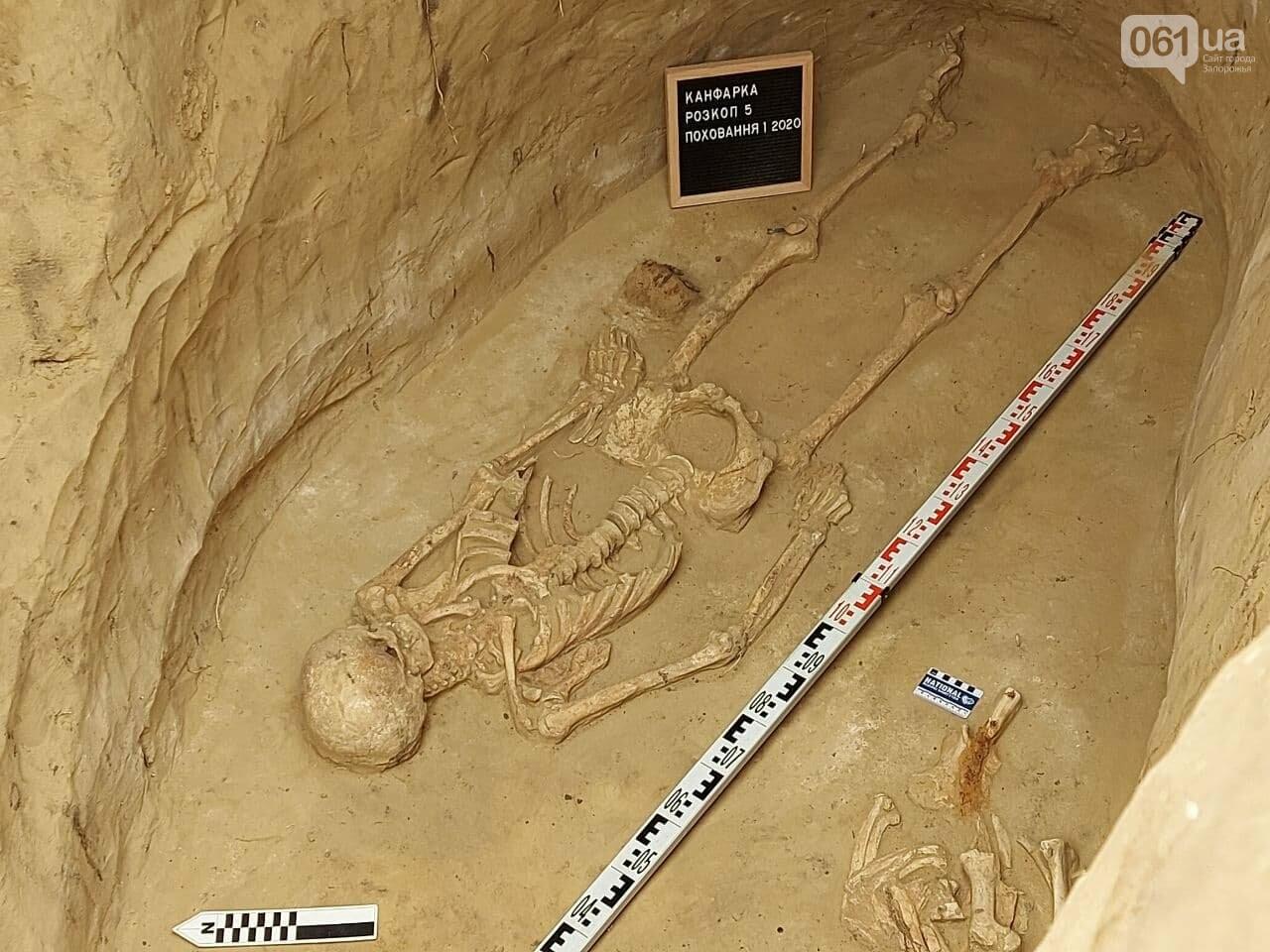 В Запорожье на Хортице нашли захоронение скифского воина, которому 2500 лет, - ФОТОРЕПОРТАЖ, фото-5