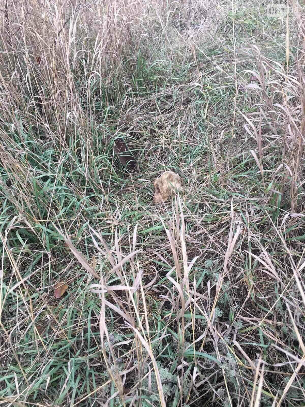 Урожай на костях: в Гуляйполе фермер распахал еврейское кладбище, - ФОТО, фото-4