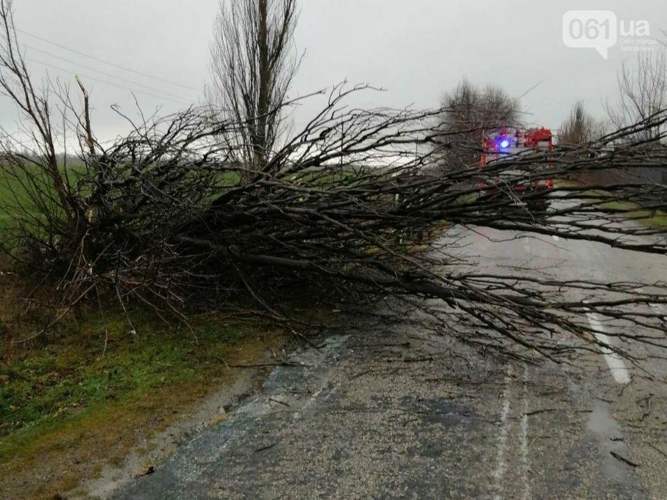 Под Запорожьем упавшее дерево перегородило проезд по дороге, - ФОТО , фото-2