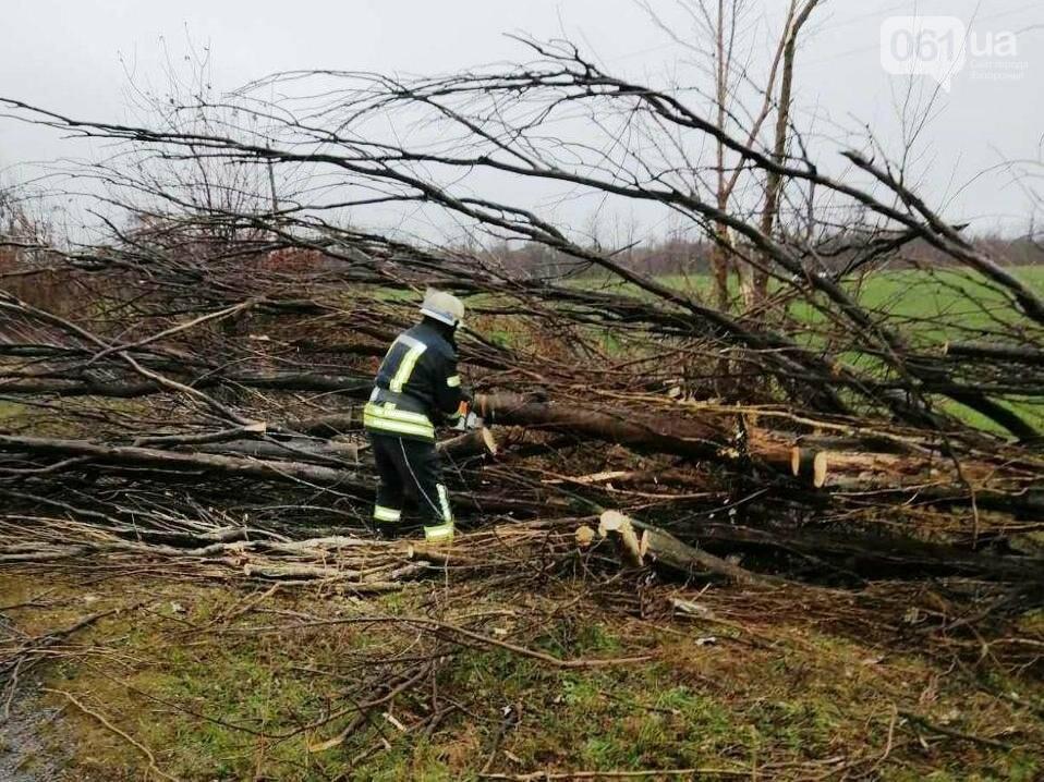 Под Запорожьем упавшее дерево перегородило проезд по дороге, - ФОТО , фото-1