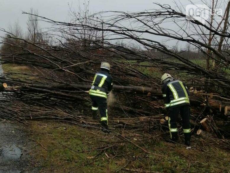 Под Запорожьем упавшее дерево перегородило проезд по дороге, - ФОТО , фото-3