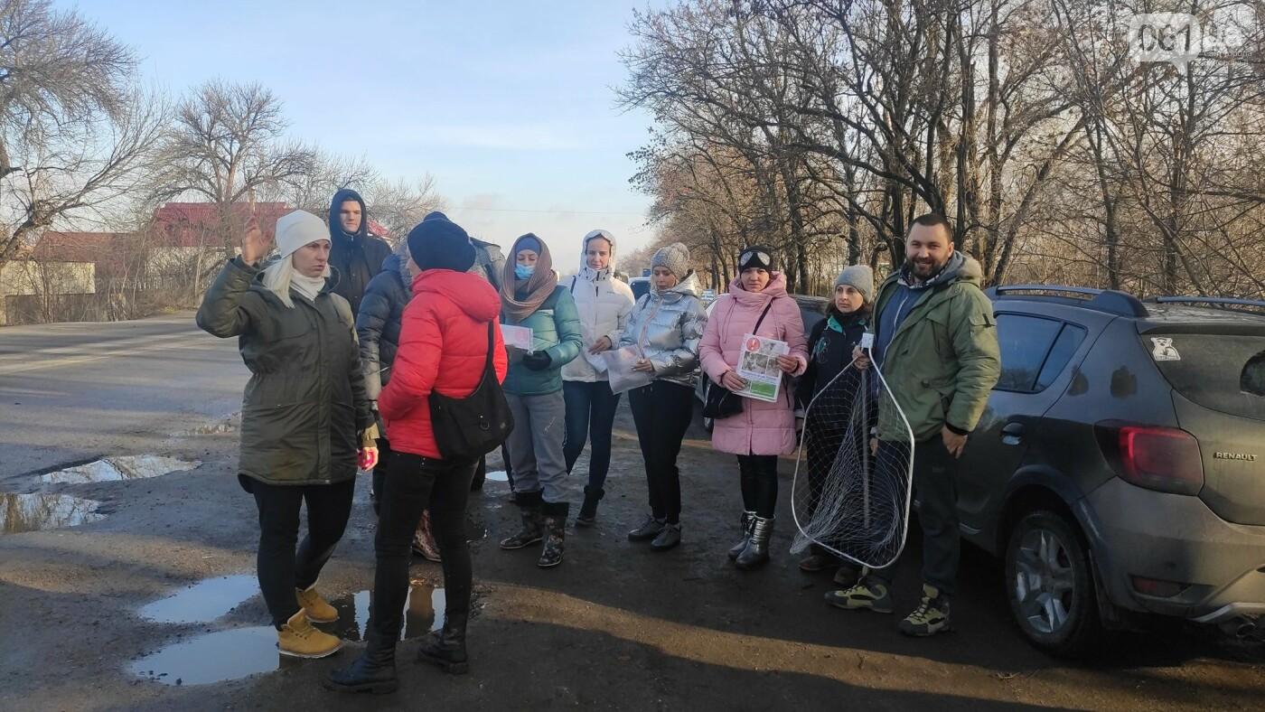 В Запорожье десятки волонтеров ищут потерявшегося мопса, который испугался новогодних салютов , фото-2