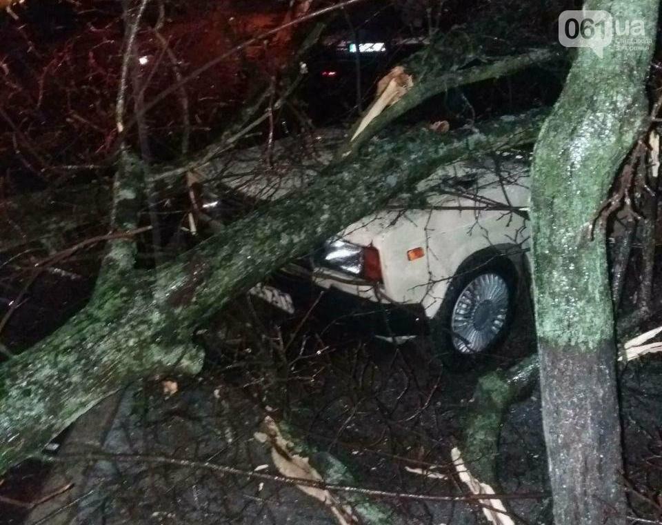 В Мелитополе дерево рухнуло на автомобиль, - ФОТОФАКТ , фото-1
