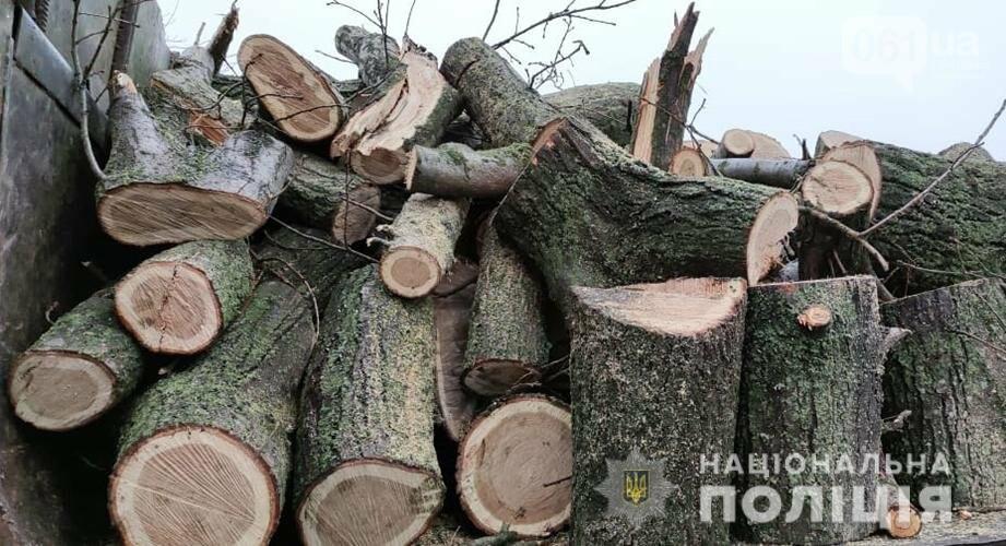 Запорожская полиция зафиксировала 28 фактов незаконной вырубки деревьев , фото-5