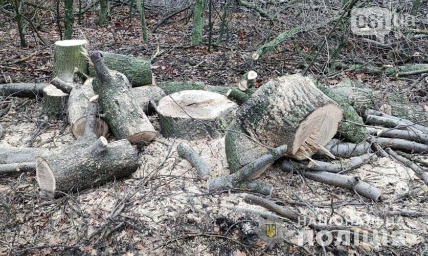 Запорожская полиция зафиксировала 28 фактов незаконной вырубки деревьев , фото-4