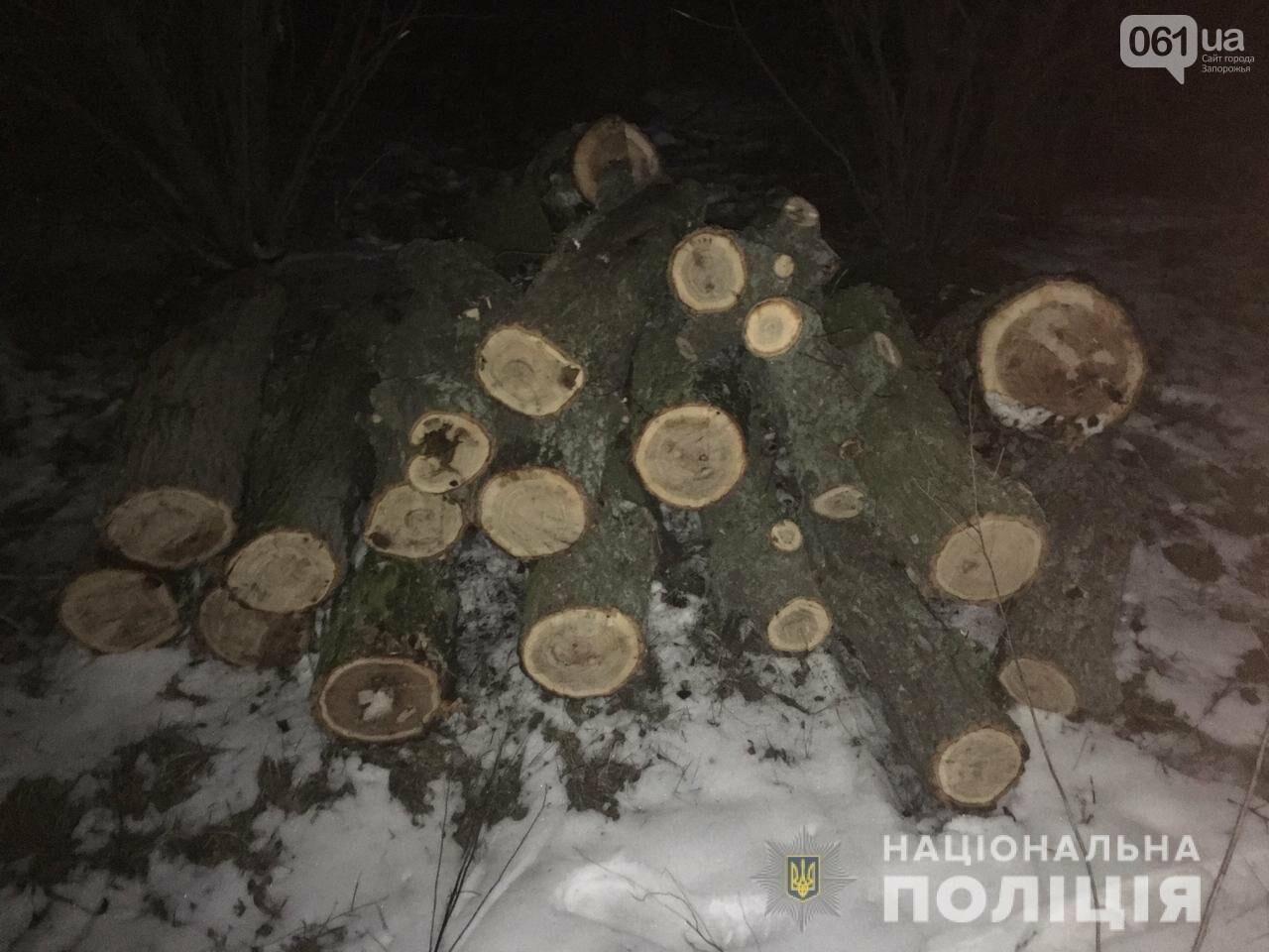 Запорожская полиция зафиксировала 28 фактов незаконной вырубки деревьев , фото-1