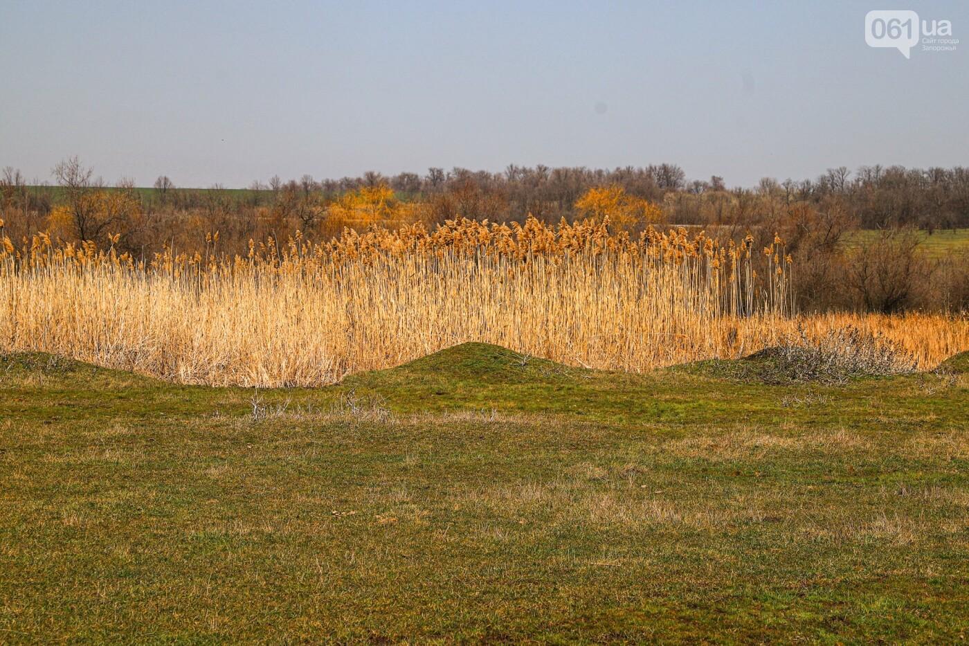 Цветущие крокусы и горы мусора: как сейчас выглядит балка Партизанская в Запорожье, - ФОТО, фото-22