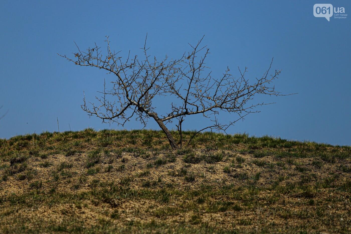 Цветущие крокусы и горы мусора: как сейчас выглядит балка Партизанская в Запорожье, - ФОТО, фото-24