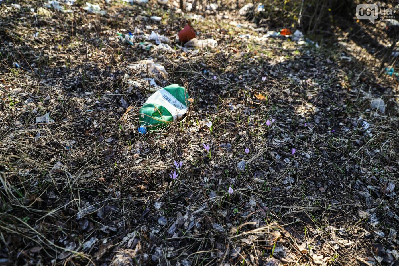 Цветущие крокусы и горы мусора: как сейчас выглядит балка Партизанская в Запорожье, - ФОТО, фото-13