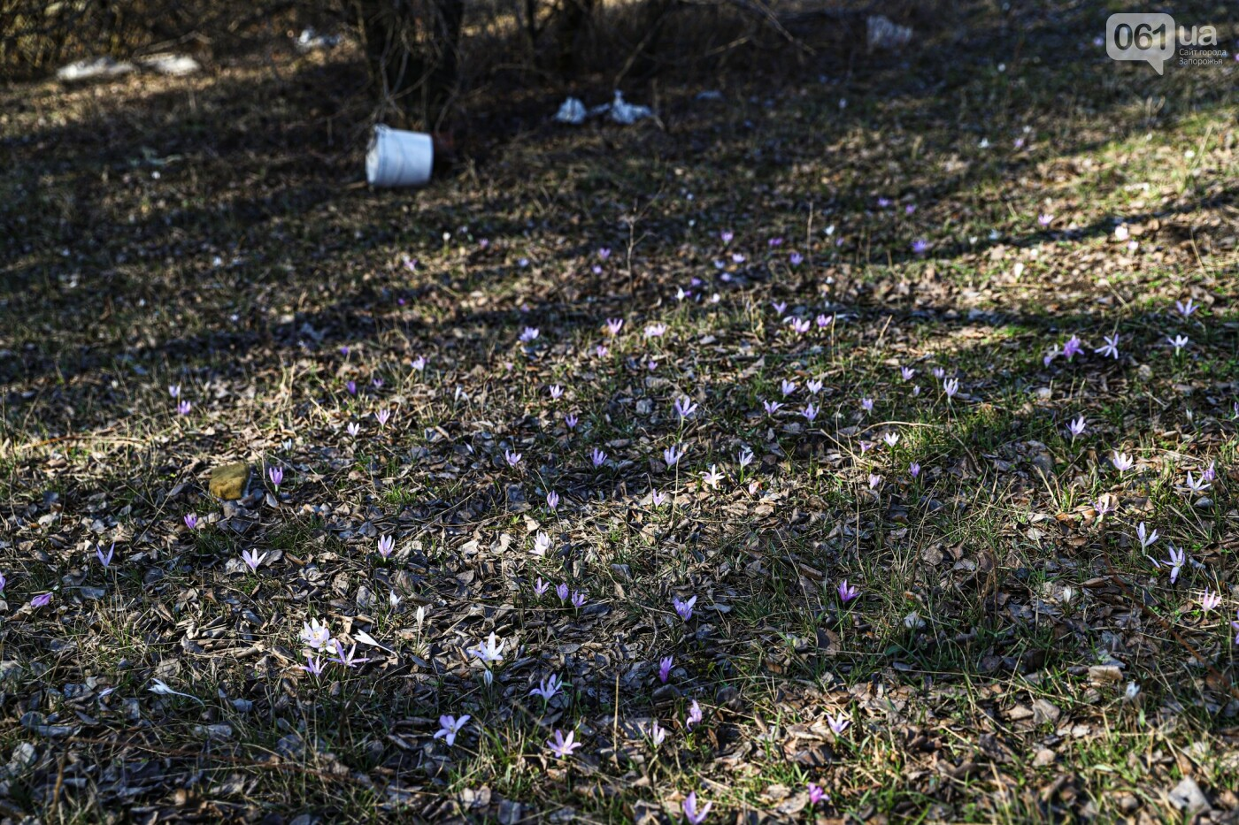 Цветущие крокусы и горы мусора: как сейчас выглядит балка Партизанская в Запорожье, - ФОТО, фото-15