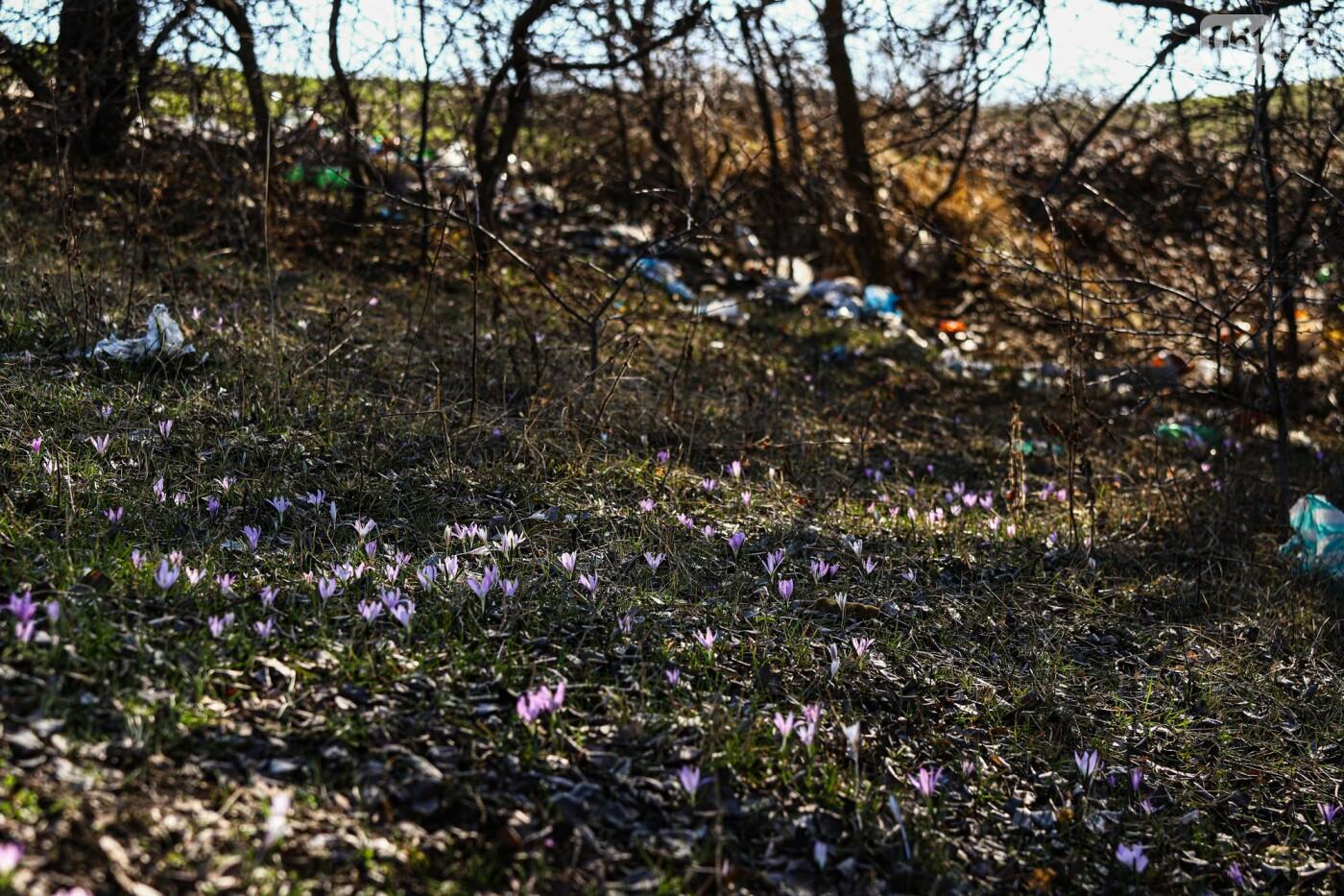 Цветущие крокусы и горы мусора: как сейчас выглядит балка Партизанская в Запорожье, - ФОТО, фото-16