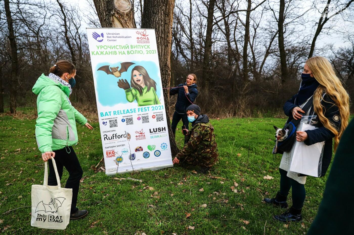 На Хортице выпустили более 700 летучих мышей, спасенных волонтерами, - ФОТОРЕПОРТАЖ, фото-13