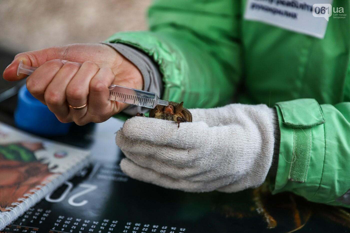На Хортице выпустили более 700 летучих мышей, спасенных волонтерами, - ФОТОРЕПОРТАЖ, фото-3