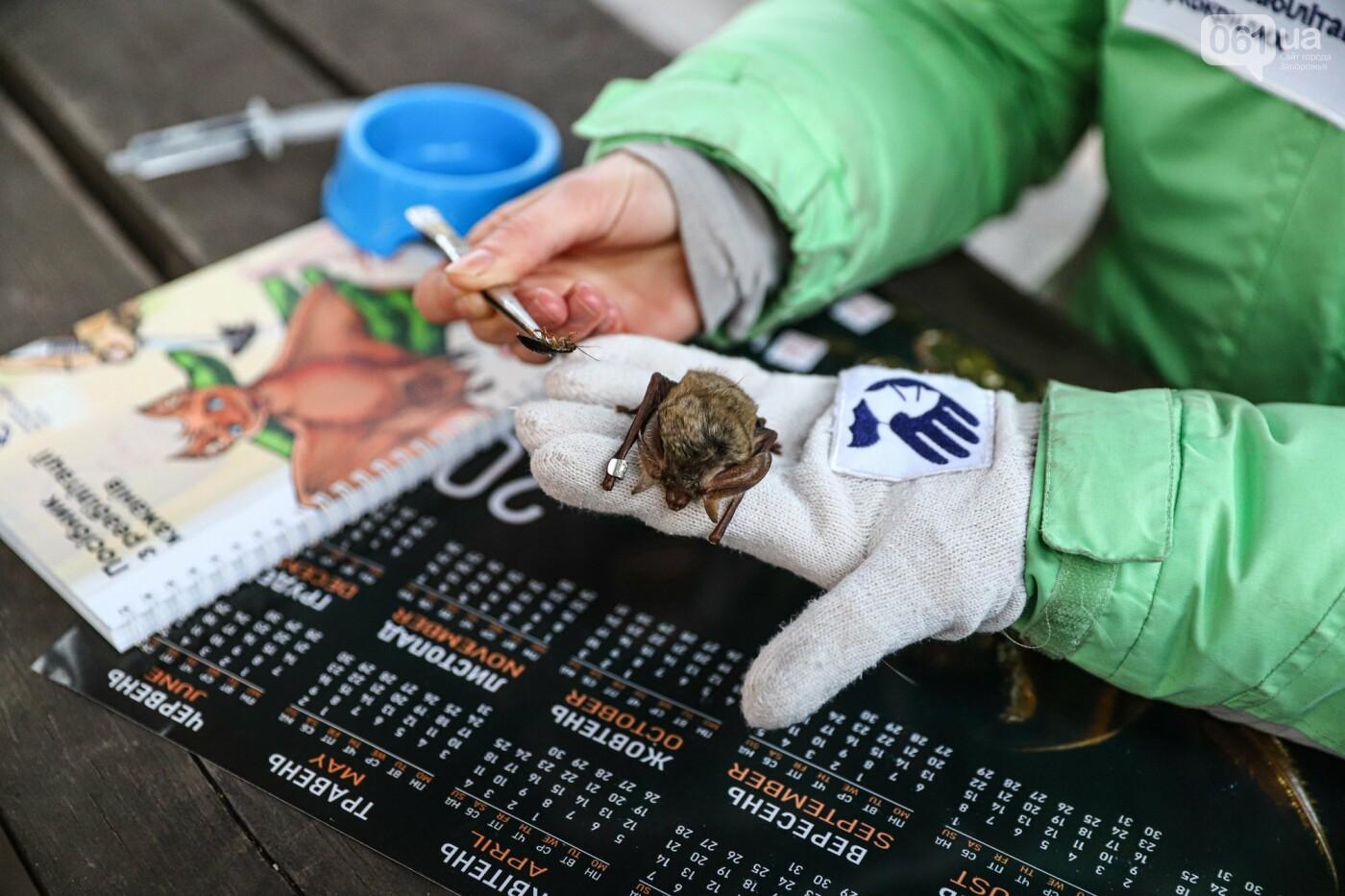 На Хортице выпустили более 700 летучих мышей, спасенных волонтерами, - ФОТОРЕПОРТАЖ, фото-6