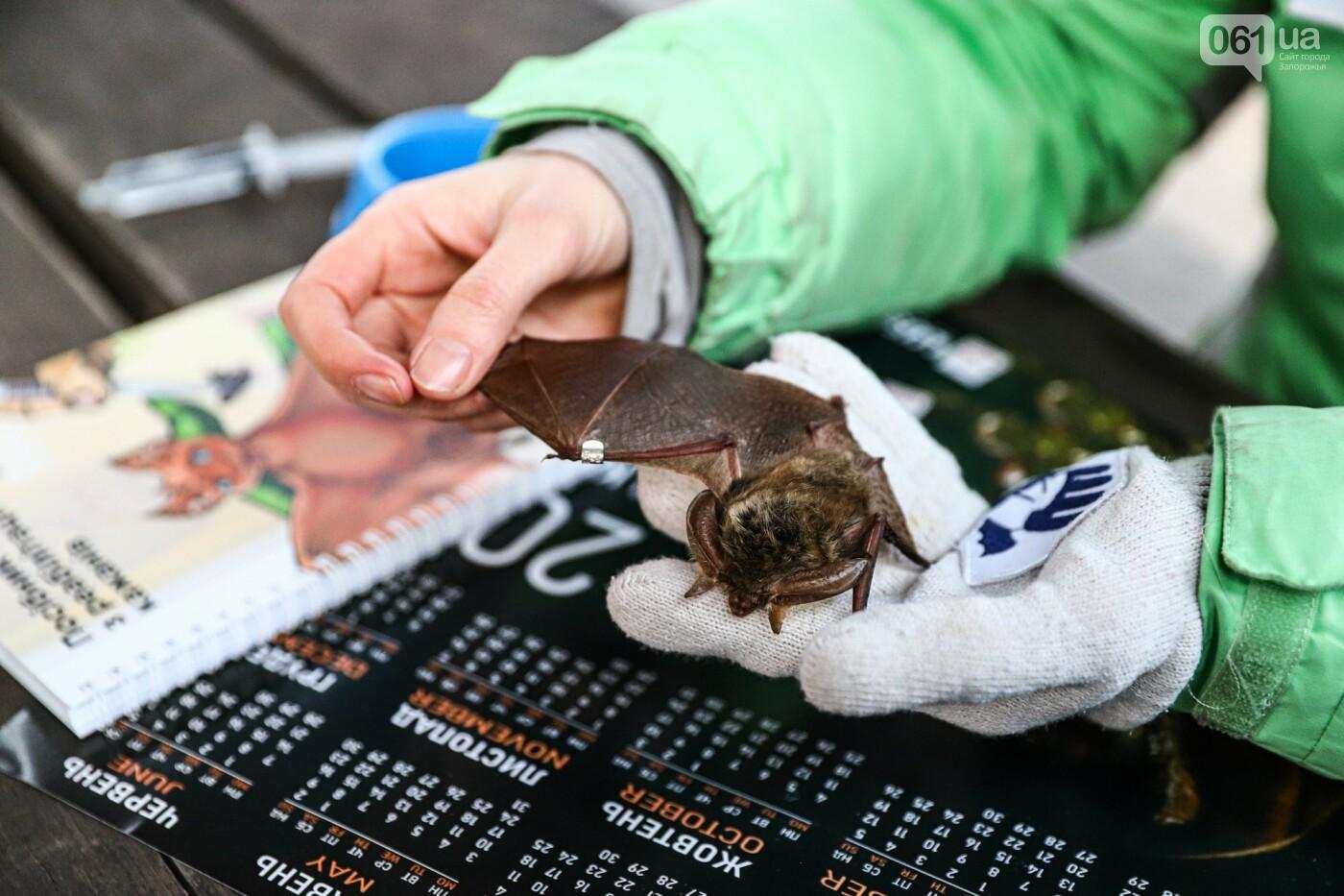 На Хортице выпустили более 700 летучих мышей, спасенных волонтерами, - ФОТОРЕПОРТАЖ, фото-4