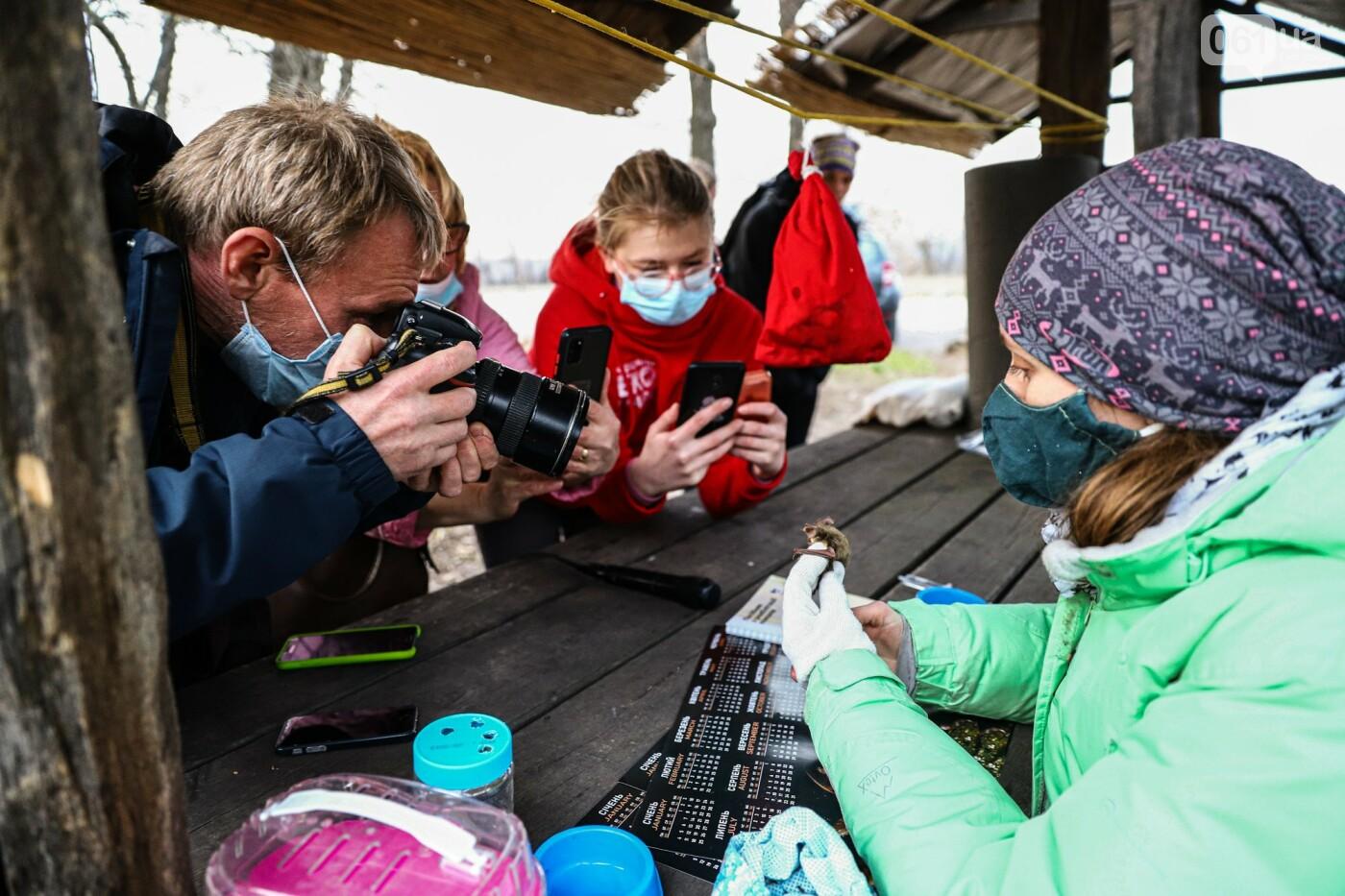 На Хортице выпустили более 700 летучих мышей, спасенных волонтерами, - ФОТОРЕПОРТАЖ, фото-8