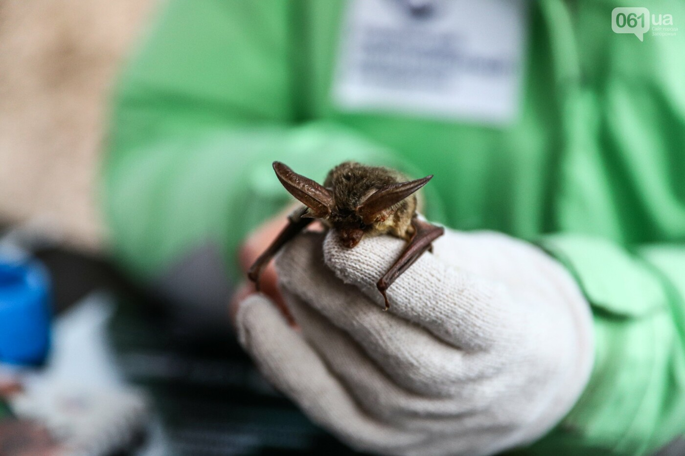 На Хортице выпустили более 700 летучих мышей, спасенных волонтерами, - ФОТОРЕПОРТАЖ, фото-2