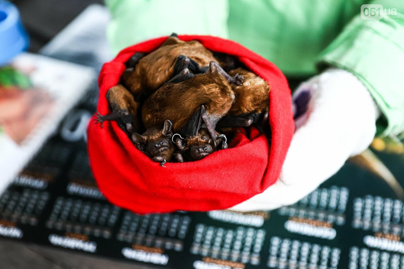 На Хортице выпустили более 700 летучих мышей, спасенных волонтерами, - ФОТОРЕПОРТАЖ, фото-9