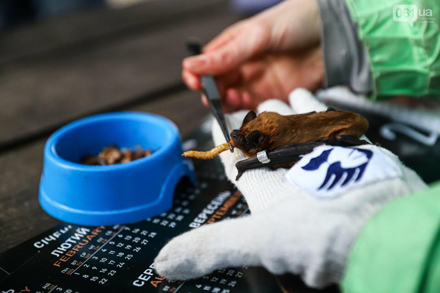 На Хортице выпустили более 700 летучих мышей, спасенных волонтерами, - ФОТОРЕПОРТАЖ, фото-11