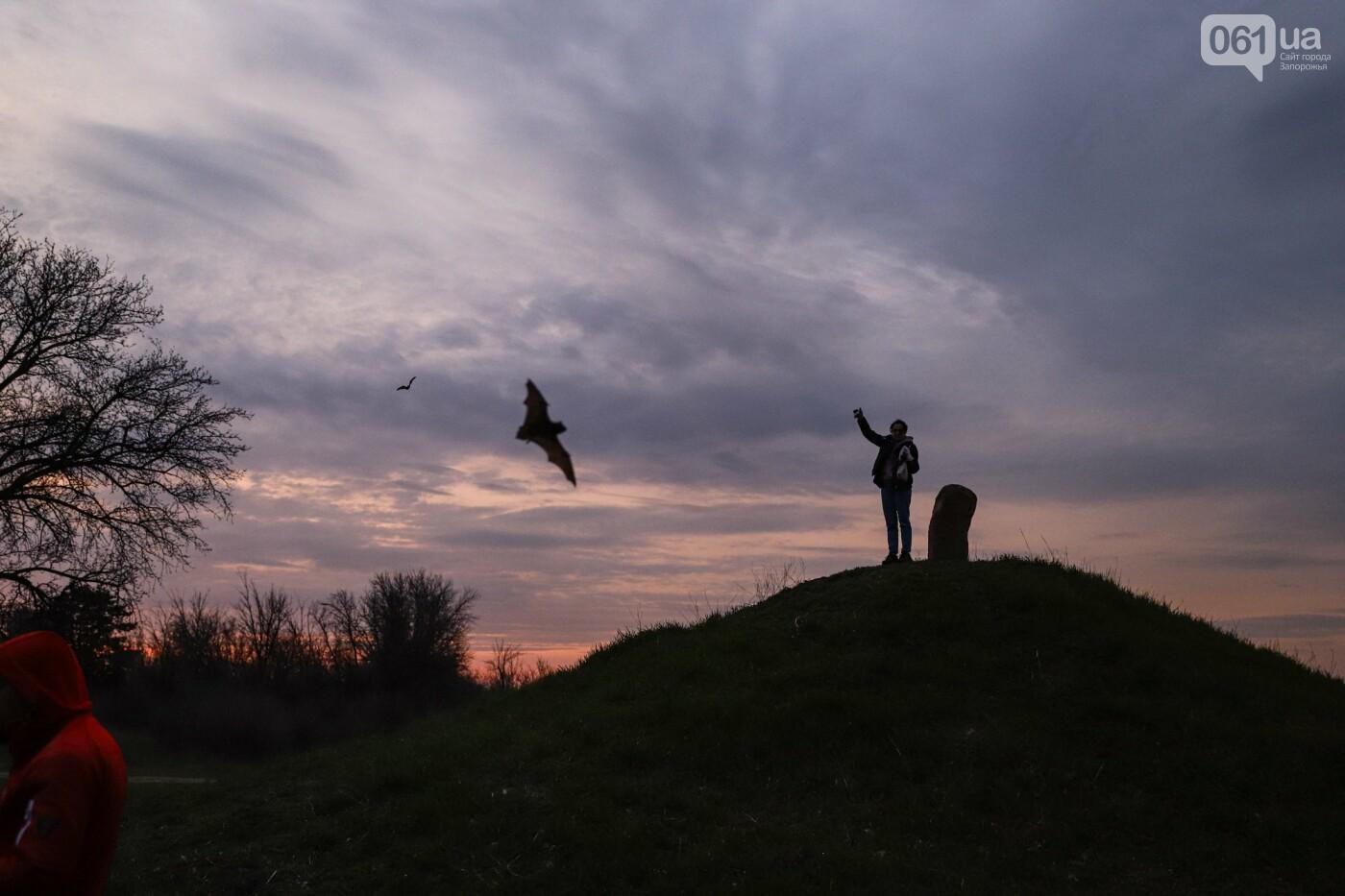 На Хортице выпустили более 700 летучих мышей, спасенных волонтерами, - ФОТОРЕПОРТАЖ, фото-23