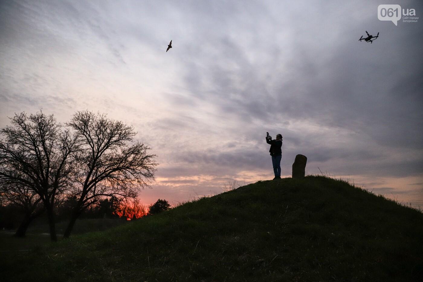 На Хортице выпустили более 700 летучих мышей, спасенных волонтерами, - ФОТОРЕПОРТАЖ, фото-24