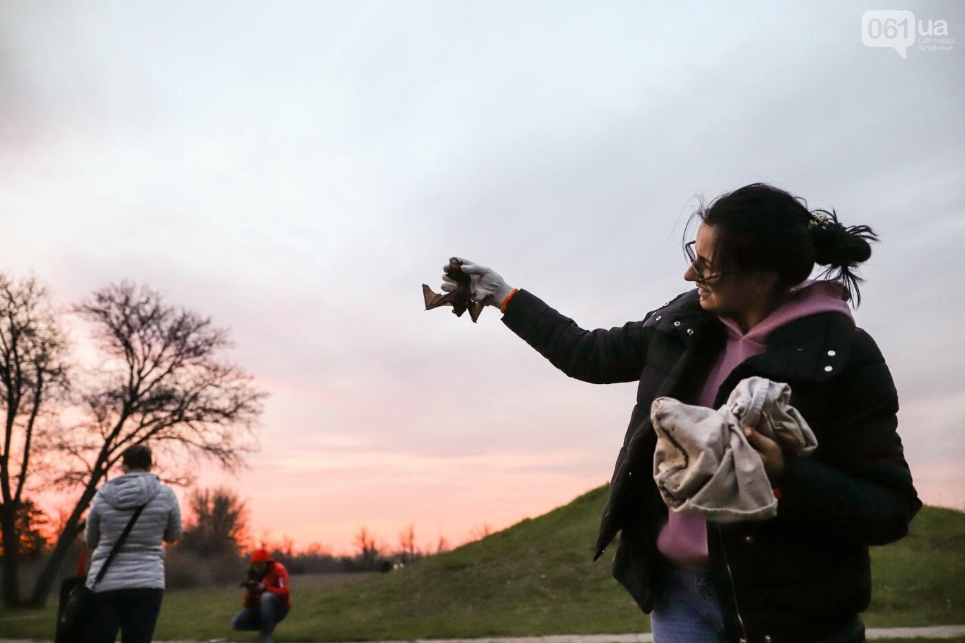 На Хортице выпустили более 700 летучих мышей, спасенных волонтерами, - ФОТОРЕПОРТАЖ, фото-22