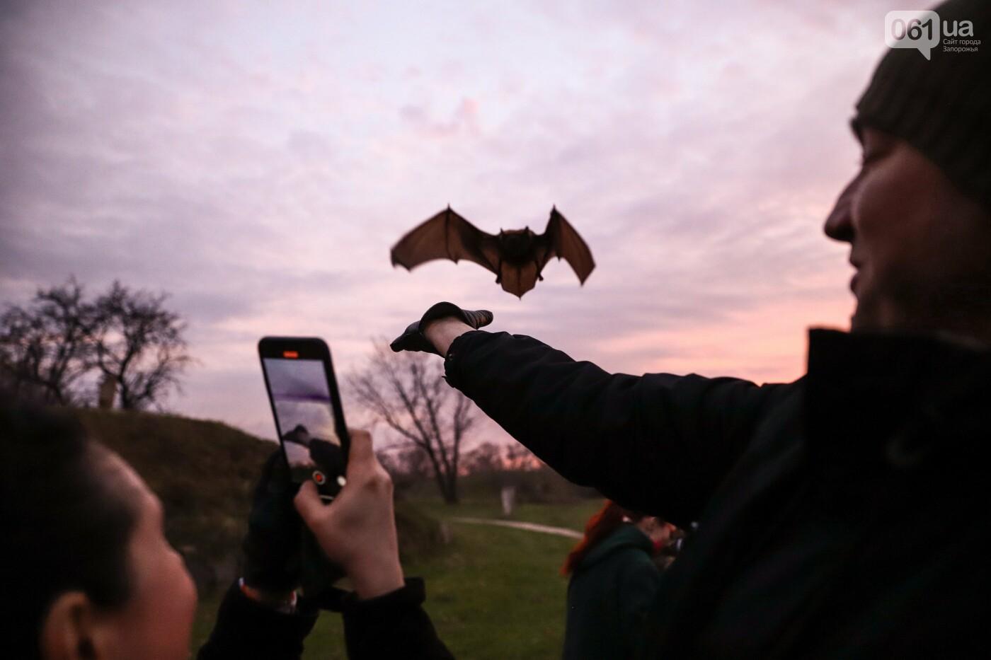 На Хортице выпустили более 700 летучих мышей, спасенных волонтерами, - ФОТОРЕПОРТАЖ, фото-27