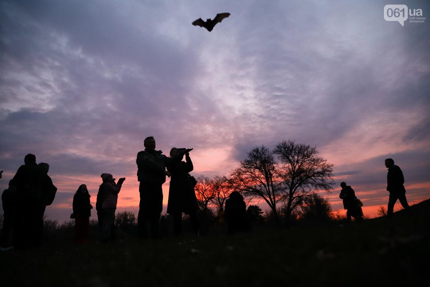 На Хортице выпустили более 700 летучих мышей, спасенных волонтерами, - ФОТОРЕПОРТАЖ, фото-29