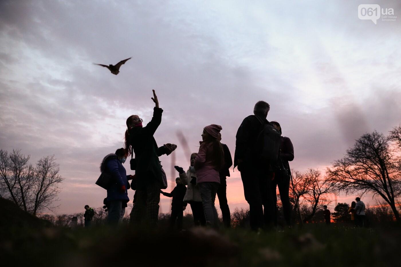 На Хортице выпустили более 700 летучих мышей, спасенных волонтерами, - ФОТОРЕПОРТАЖ, фото-30