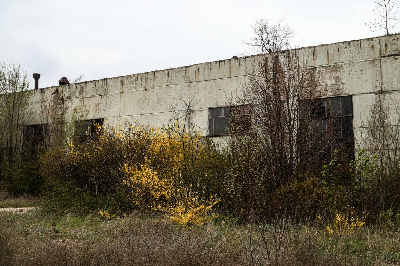 В Степногорске пытаются разобрать на металлолом шахту - промплощадка ГОКа превратилась в руины, - ФОТОРЕПОРТАЖ , фото-34