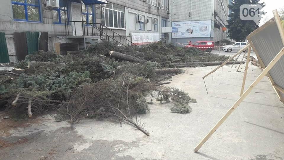 В Запорожье на Маяковского незаконно срубили огромные ели, - ФОТО , фото-4