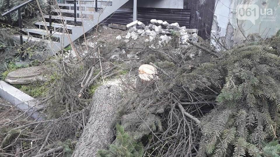 В Запорожье на Маяковского незаконно срубили огромные ели, - ФОТО , фото-5