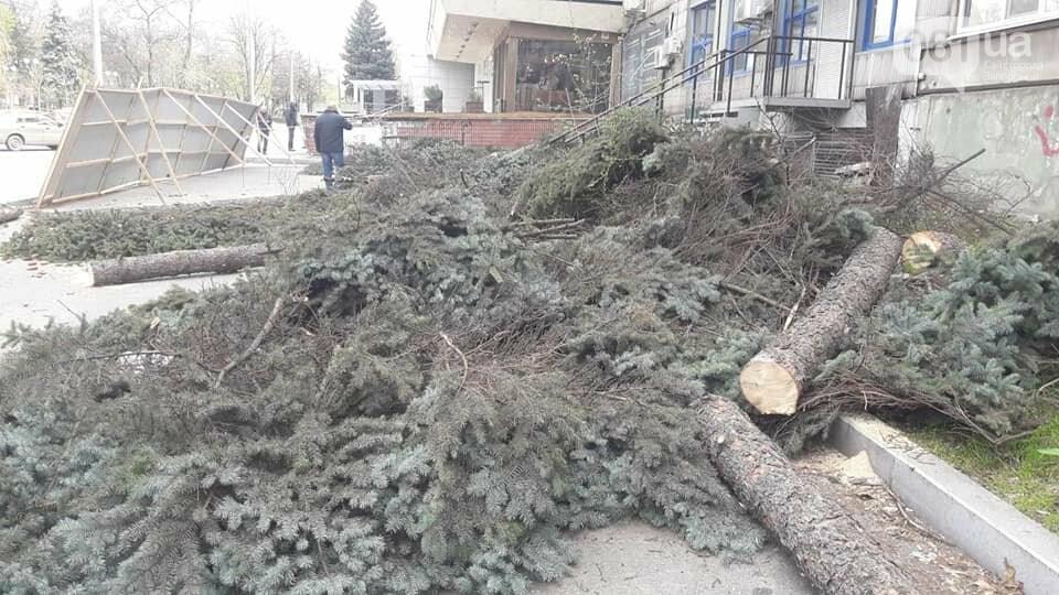 В Запорожье на Маяковского незаконно срубили огромные ели, - ФОТО , фото-2