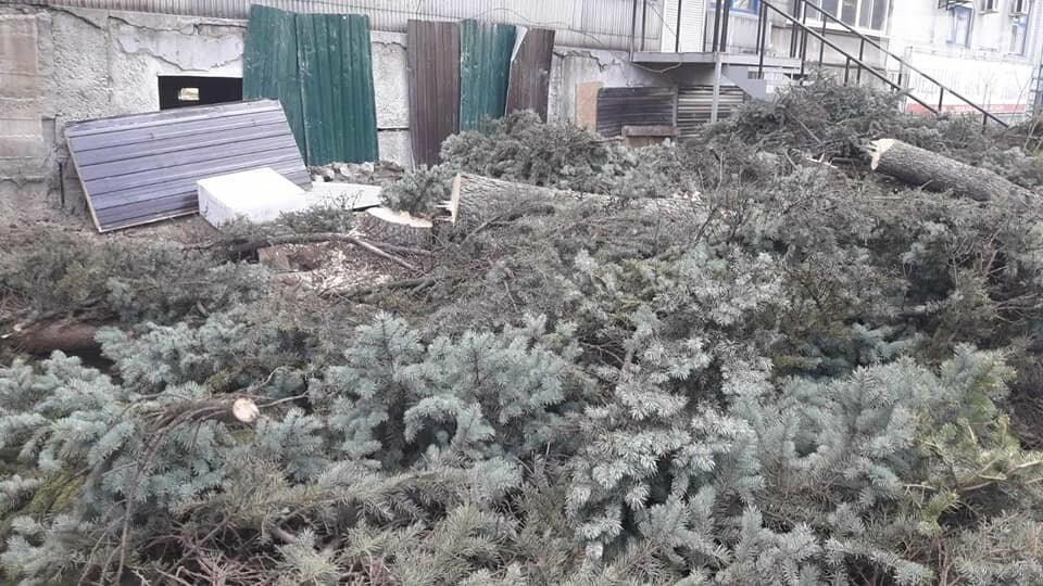 В Запорожье на Маяковского незаконно срубили огромные ели, - ФОТО , фото-3
