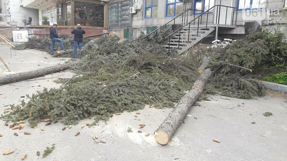 В Запорожье на Маяковского незаконно срубили огромные ели, - ФОТО , фото-6
