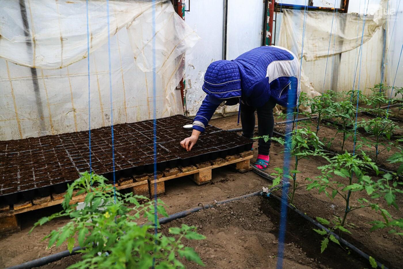 изготовление теплиц под ключ в запорожской области