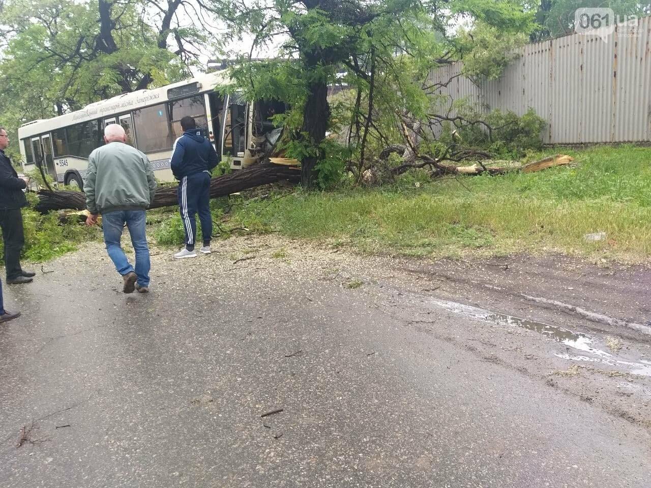 photo2021 06 0311 53 25 60b8d86a2fa16 - В Запорожье коммунальный автобус врезался в дерево: в ДТП пострадали двое человек, - ФОТО